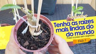 Técnicas de Cultivo dessas Maravilhosas Plantas Rosa do Deserto