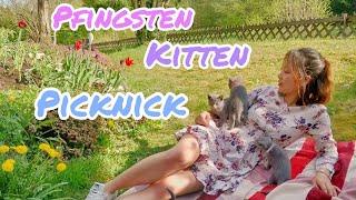 Frohe Pfingsten|Picknick mit süßen Ruṡṡiṡch BĮau Kitten|Dẫn 4 bé mèo Nġa mắt xąnh đi picnic
