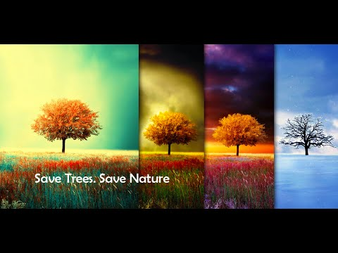 Awesome-Land Live wallpaper HD : Grow more trees - Apps on Google Play