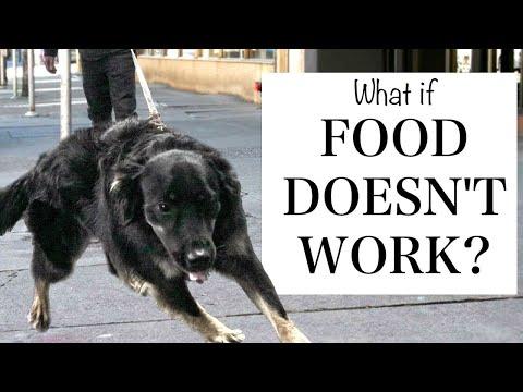 Changing Your Leash Walking Training When Food ISN'T Working!