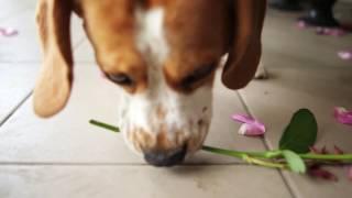 Kvitochka_Advert(Заказать живые цветы, живые цветы с доставкой во Львове, живые цветы в Львове недорого, доставка живые цветы..., 2016-05-19T16:48:59.000Z)