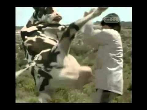 Super Cow.flv