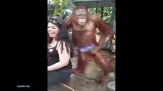 Hot Apa Lucu !! Aksi Jahil Monyet ke Pengunjung wanita