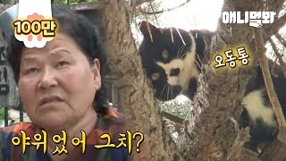10m 나무 위에 살아도 뚱냥이 만드는 할매들의 위엄ㅋㅋ l Cat Living On Top Of A 10m…