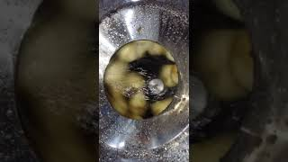감자탈피기 'HMP -20'  - 감자탈…