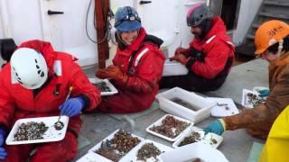 Exploring Arctic Ecosystems