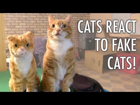 Cats React to FAKE Cats!