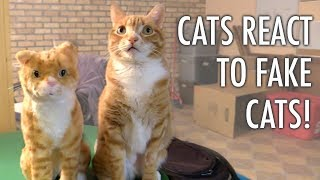 Cats React to FAKE Cats!  Cole and Marmalade