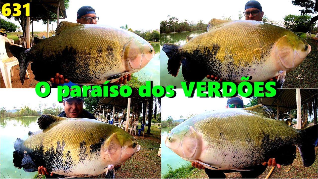 O Paraíso dos VERDÕES chamado Pesqueiro Tio Chico - Programa Fishingtur na TV 631