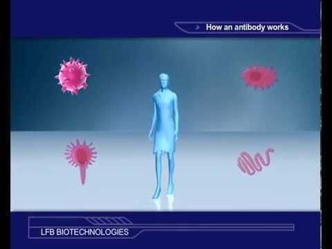 How an antibody works?