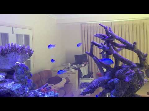 Schooling Fish For Your Reef Tank