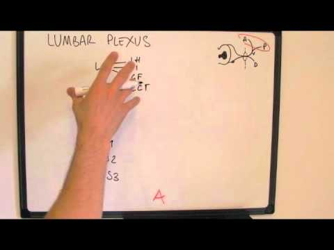 Memorising the Lumbar Plexus - easy way to draw it
