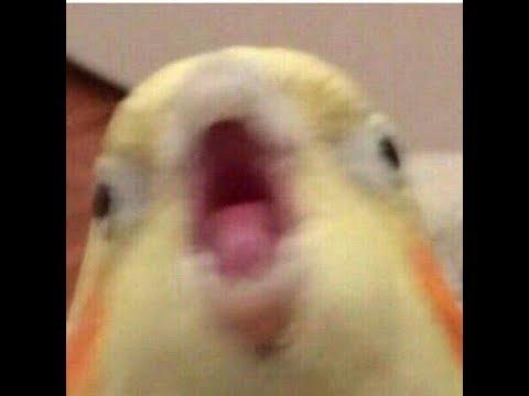 Приколы с птичками и попугаями #1. Смешные попугичи и мемы про них