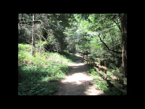 Redwood Regional Park Hike   Canyon, CA