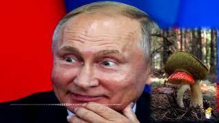 Как простофили Путина вляпались по самые уши