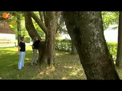 Invasion der Exoten [Full Video]