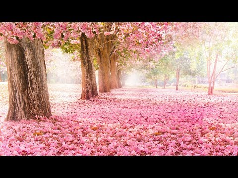 Peaceful music, Relaxing music, Instrumental music, Nature's Valentine