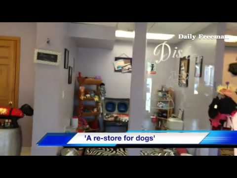 Habitat for #Dogmanity, a new re-store for dogs at 385 Fallkill Ave,  #Kingston