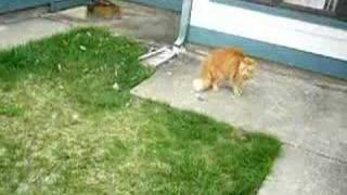 Cat attacks dog
