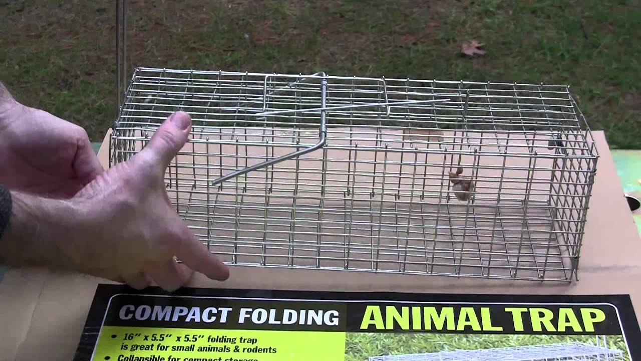 Harbor Frieght Small live trap - YouTube