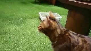 KURASIKIヒョウ猫の森 thumbnail