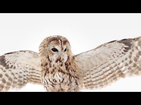 """WGU Owl Commercial """"Air Quotes"""""""
