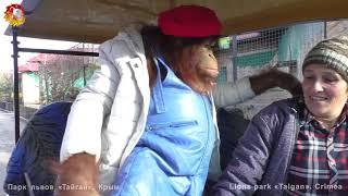Дана - звезда Тайгана. Орангутан  в машинке. Dana is the star of Taigan. Orangutan rides in car.