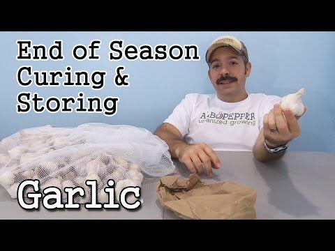 Garlic End of Season: Curing, Storing, Preserving & Selecting Seed