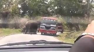 Elephant attack :Elephant chasing bus in forest