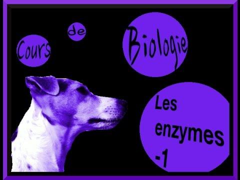 B2- Les enzymes - Partie 1