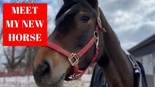MEET MY NEW HORSE || leaandbellagrace