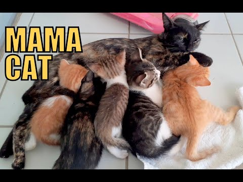 the-mama-cat-who-adopts-orphan-kittens.