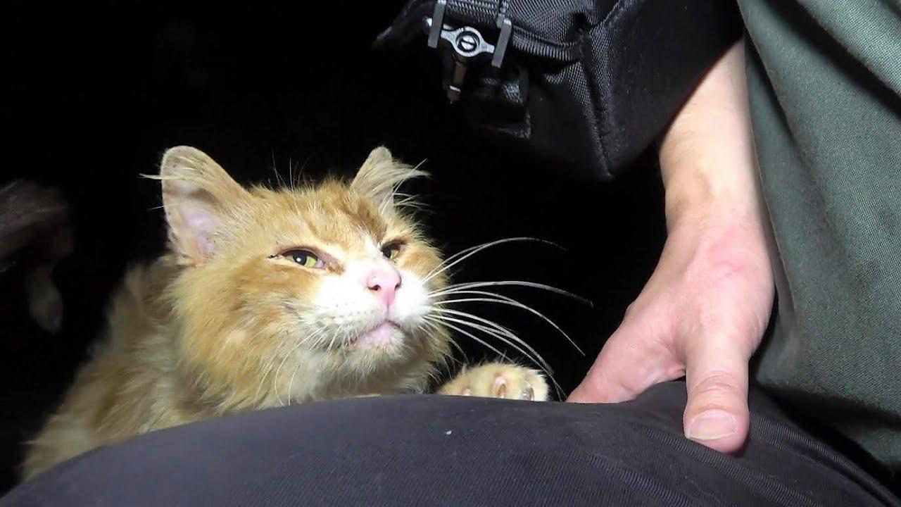 凄い勢いで甘える父猫が帰り際に娘猫と共に追いかけて来た