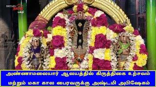அண்ணாமலையார் ஆலயத்தில் கிருத்திகை உற்சவம் & மகா கால பைரவருக்கு அஷ்டமி அபிஷேகம் | Thiruvannamalai
