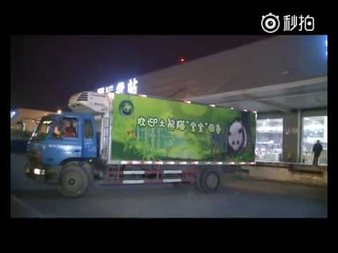 Giant Panda BAO BAO arrives at Dujiangyan base