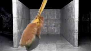 Cat Cyrus- wrecking cat ball