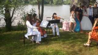 Свадьба в Серебряном бору, струнное трио