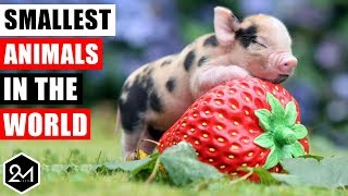 Top 10 Smallest Animals In The World 2017
