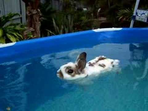 baxter relaxes in pool youtube