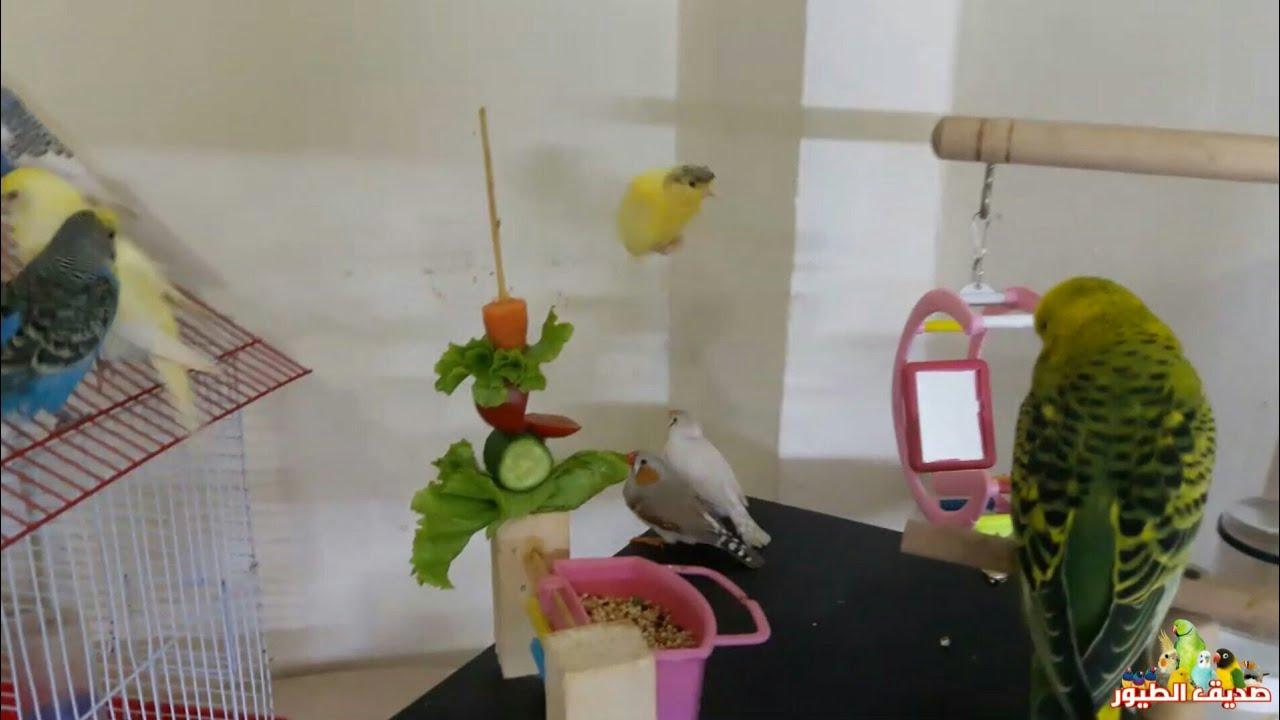 جميع أنواع الخضار و الفواكه المفيدة جدا للطيور وجميع الأنواع السامة والمضرة