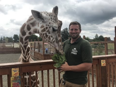 Animal Adventures with Jordan: Reticulated Giraffe