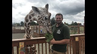 Animal Adventures with Jordan: Reticulated Giraffe thumbnail