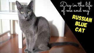A DAY IN THE LIFE OF ME AND MY RUSSIAN BLUE CAT