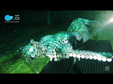 mijn zeeaquariumиз YouTube · Длительность: 17 мин39 с