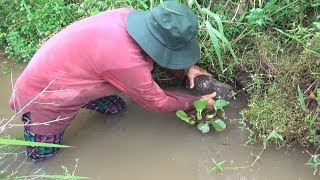 Theo cao thủ đặt bẩy bắt Ếch/catch the frog