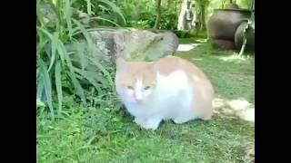 松山庭園美術館(猫ねこ展覧会2018) thumbnail