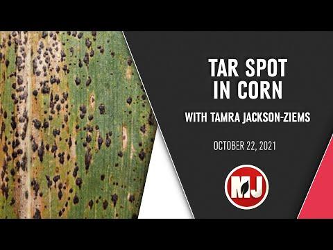 Tarspot | Tamra Jackson-Ziems | October 22, 2021
