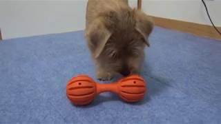 このおもちゃ、いい!(゚∀゚)