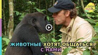 Животные хотят общаться с нами