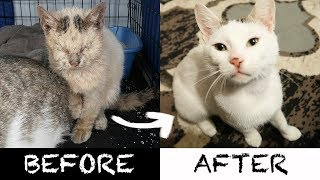 2-ameowzing-homeless-cat-transformations